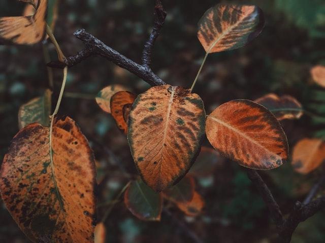 Tips-voor-tuinonderhoud-in-het-najaar